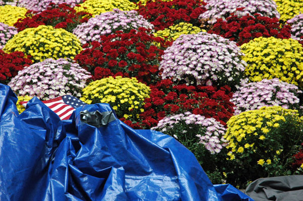 Day_8_flowers_flag_tarps.jpg
