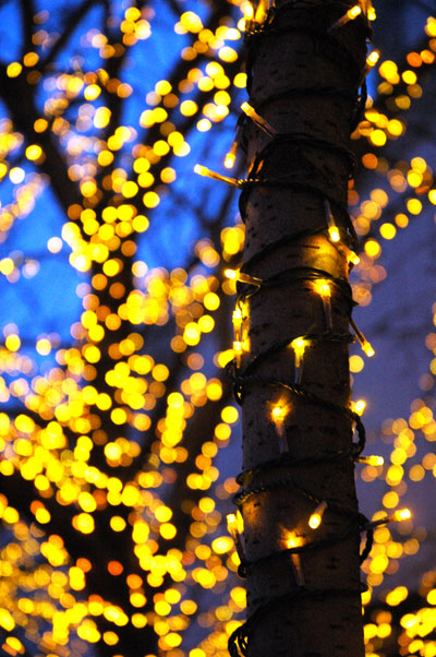 yellow_holiday_lights.jpg