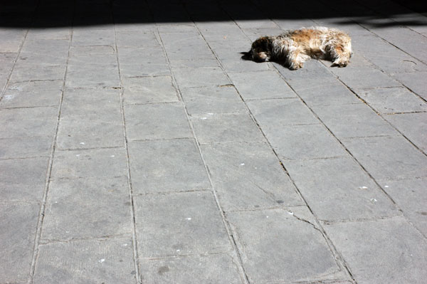 Barceloneta_sleeping-_dog.jpg