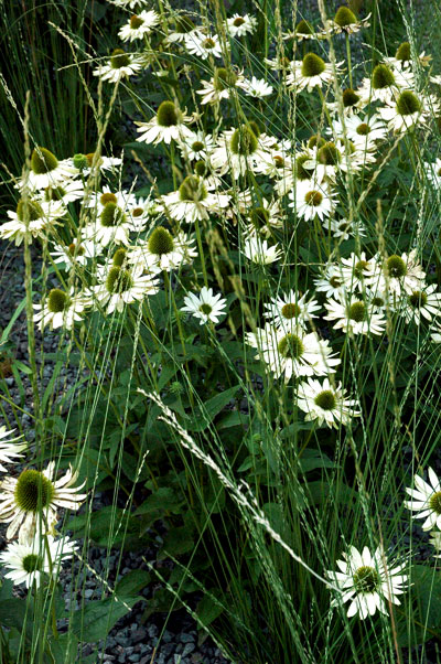 High_Line_white_flowers_2.jpg