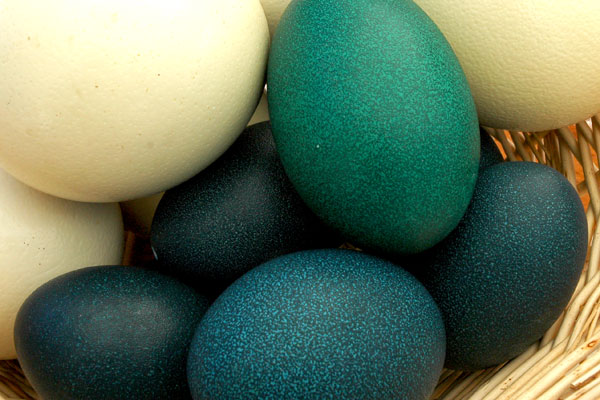 emu_and_ostrich_eggs_greenmarket.jpg