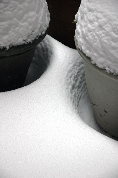 winter_pots_March_2_2009.jpg